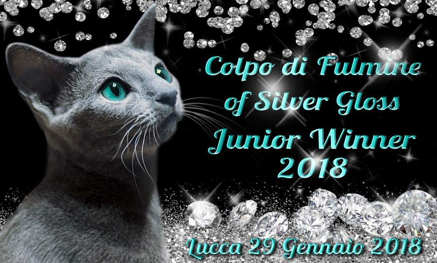 Junior-Winner-2018